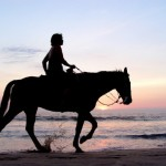 Get back to nature Professional Free and Singles, with a horse riding lesson